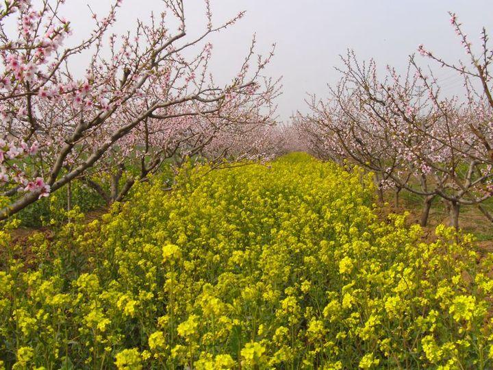 春暖花开疫情尚在 这些战