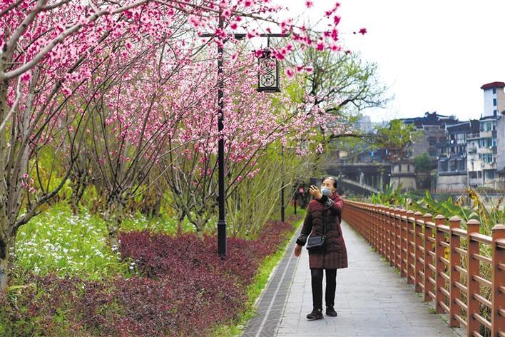 春日桃花开