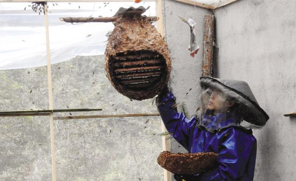 土家汉子养马蜂 探索致富新路子