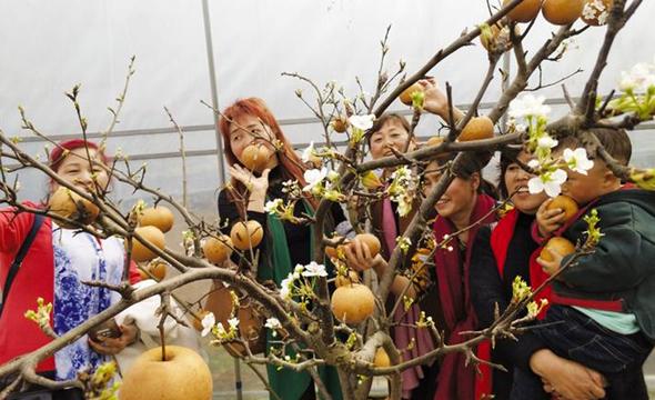 """保靖利福村有个""""花果同树""""果园"""