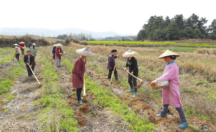 茶叶开发 助农增收