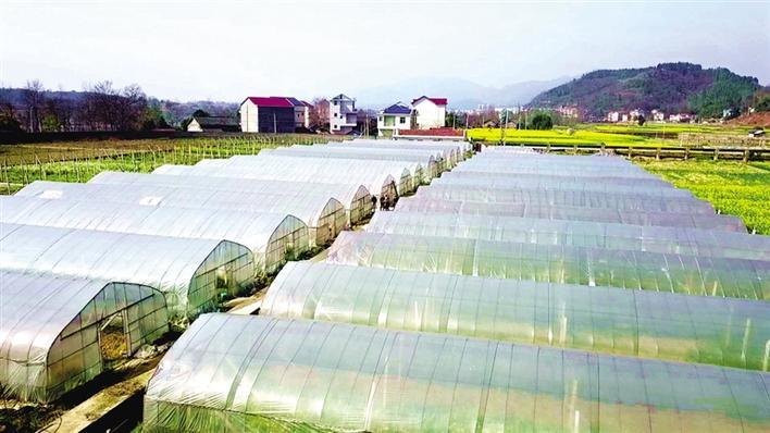 泸溪现代农业 质效齐升