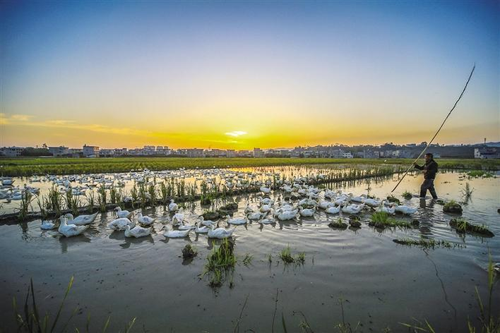 家禽养殖 促致富