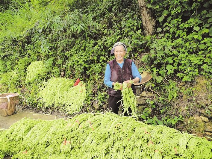 蔬菜种植助农增收
