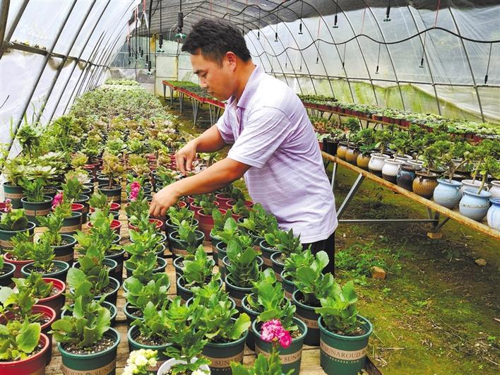小花卉 大产业