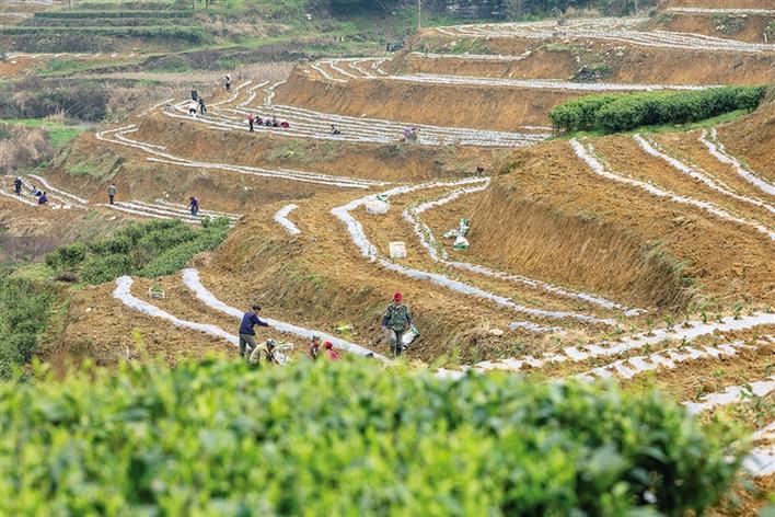茶旅融合发展 助推乡村振兴